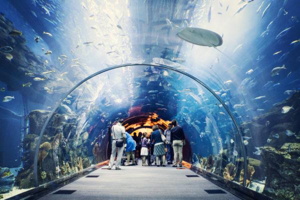 akvarium-v-trts-dubay-moll